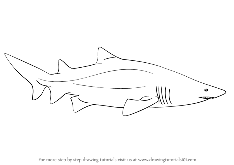 easy cartoon sharks