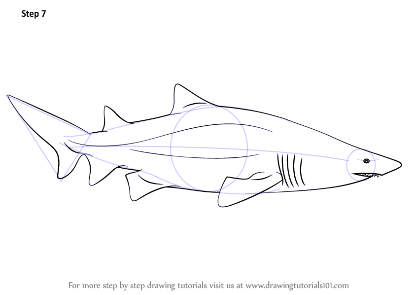 how to draw a reef shark