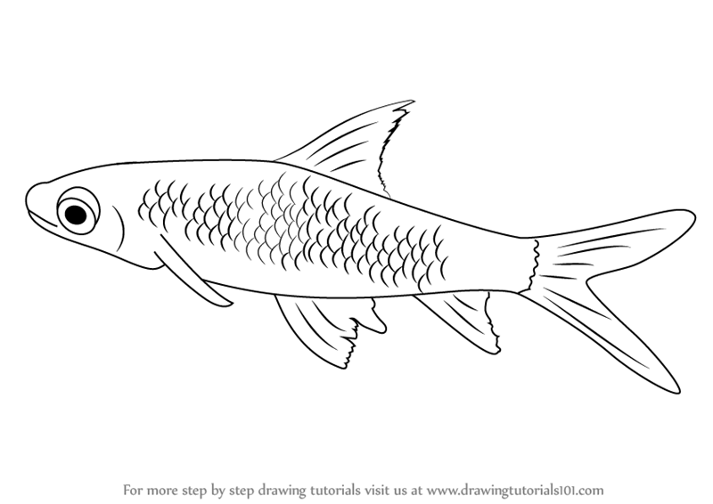 Learn How to Draw a Silver Shark (Sharks) Step by Step : Drawing ...