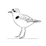How to Draw a Snowy Plover