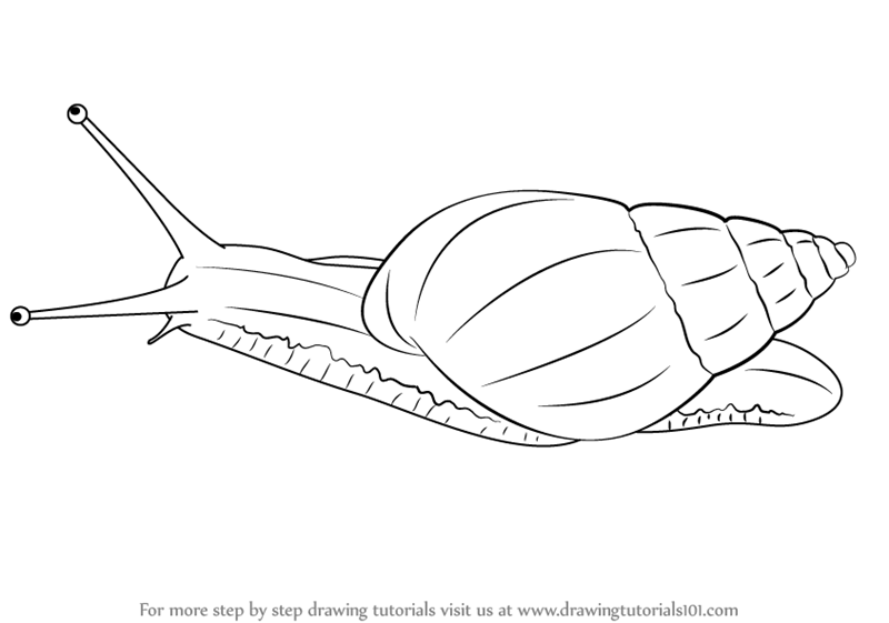 step by step how to draw a giant african snail