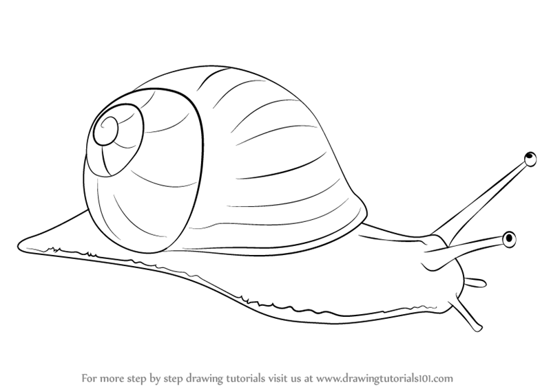 Learn how to draw a snail snails step by step drawing for Simple snail drawing