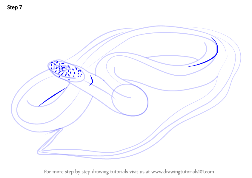 Learn How to Draw a Blue Racer