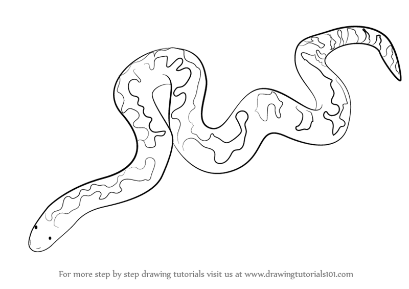 Learn How To Draw A Kenyan Sand Boa (Snakes) Step By Step