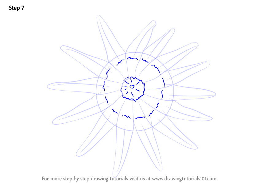 Draw Circular Shape And Dotted Line As Shown