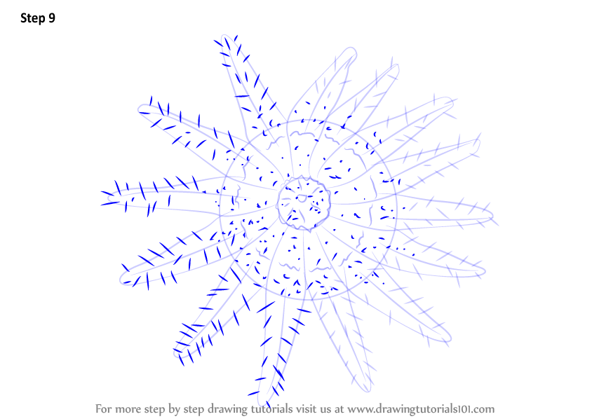 Learn How To Draw A Crown Of Thorns Starfish (Starfishes