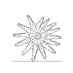 How to Draw a Crown Of Thorns Starfish