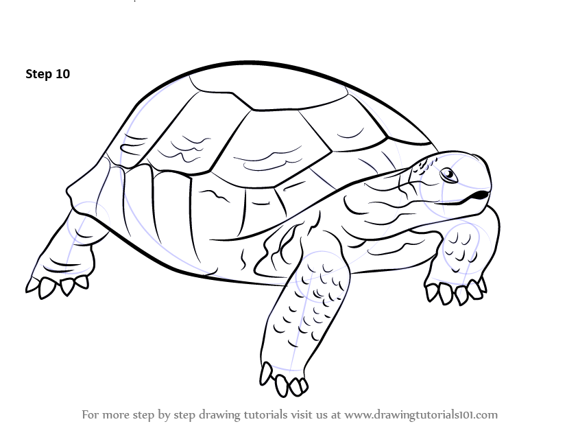 Line Drawing Of Desert Animals : Learn how to draw a desert tortoise turtles and tortoises