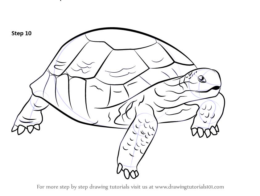 Tortoise stock vector Illustration of terrapins wild