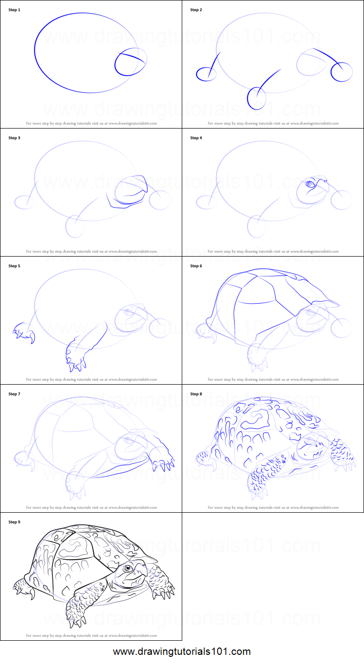 how to draw an eastern box turtle printable step by step drawing