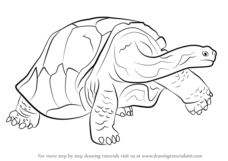 galapagos coloring pages turtle - photo#28
