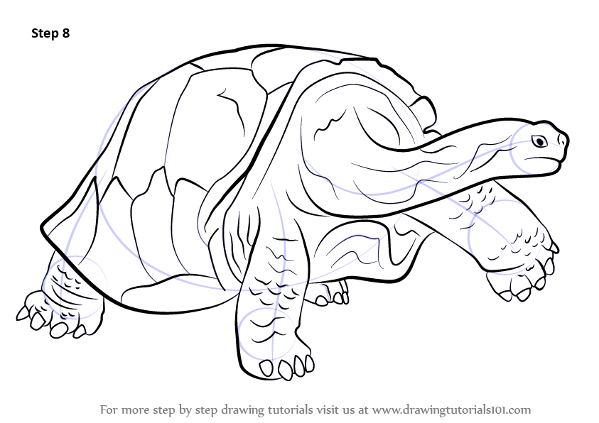 galapagos turtle coloring pages - photo #31