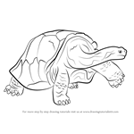 How to Draw a Galapagos Tortoise