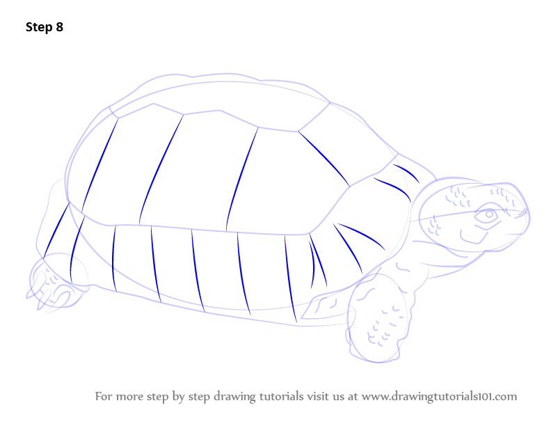 learn how to draw a greek tortoise turtles and tortoises