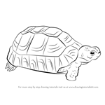 How to Draw a Greek Tortoise