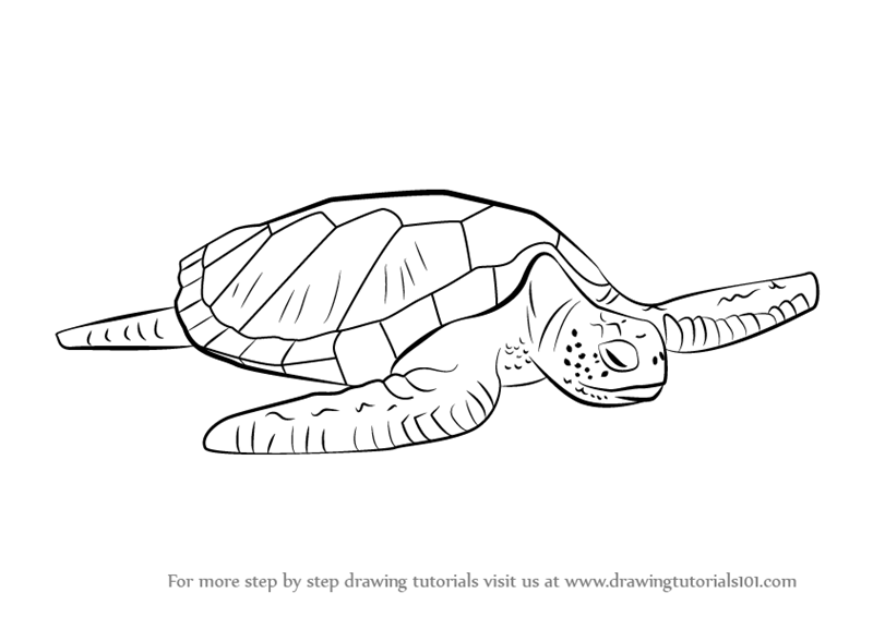 Learn How To Draw A Green Turtle Turtles And Tortoises Step By