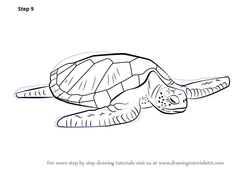 Learn How To Draw A Green Turtle Turtles And Tortoises