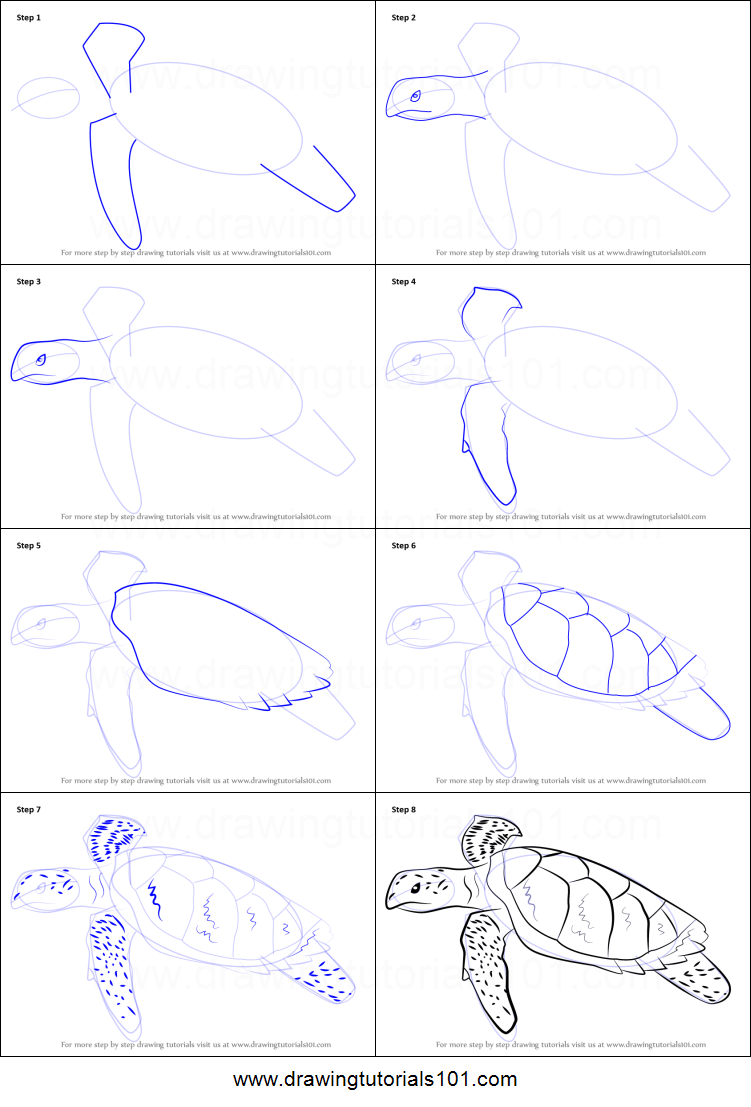 How to Draw a Hawksbill Turtle printable step by step drawing