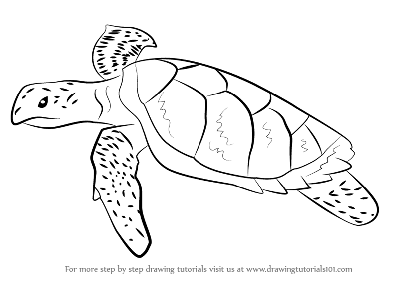 Learn How to Draw a Hawksbill Turtle Turtles and Tortoises Step