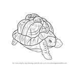 How to Draw an Indian Star Tortoise