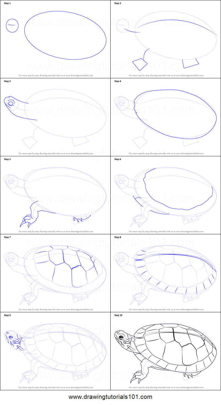 Uncategorized Turtle Drawing Step By Step how to draw a painted turtle printable step by drawing sheet drawingtutorials101 com