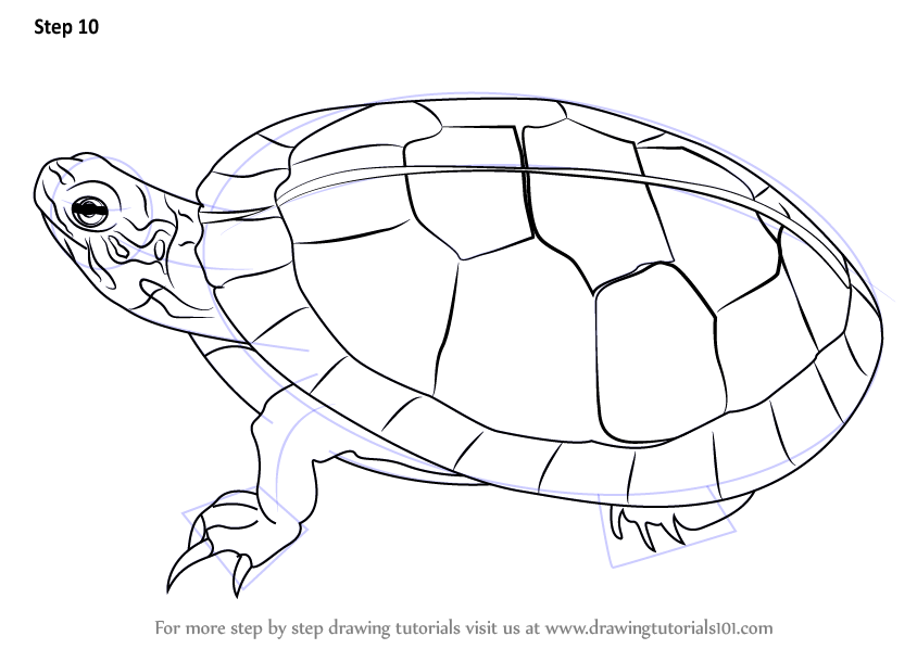 Step by Step How to Draw a Painted Turtle DrawingTutorials101com