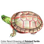 How to Draw a Painted Turtle