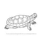 How to Draw a Pond Slider