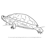 How to Draw a Red-Eared Slider