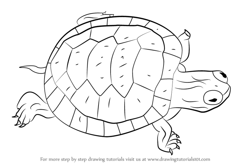 Learn how to draw a turtle turtles and tortoises step by step drawing tutorials