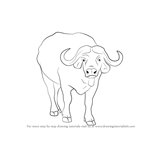 How to Draw an African buffalo