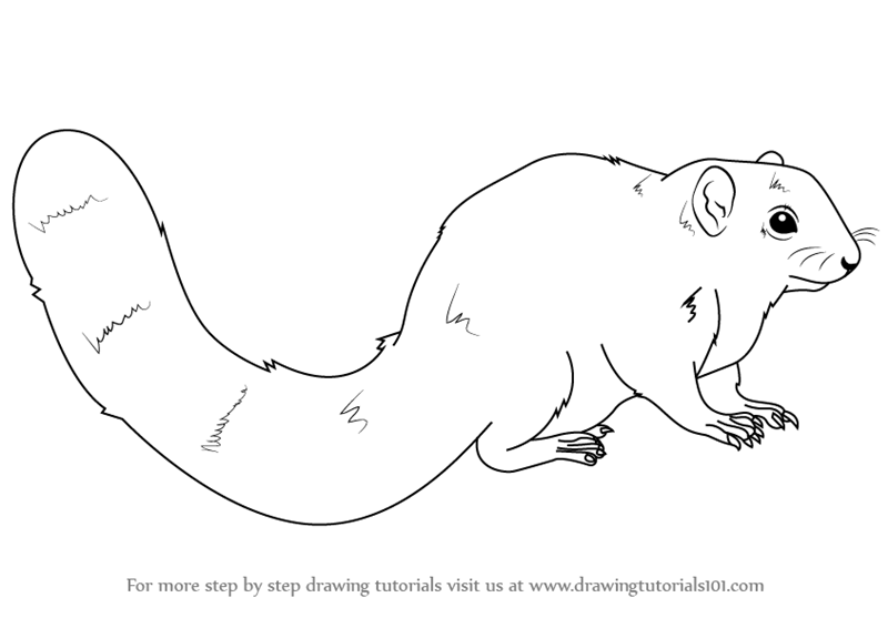 squirrel coloring pages for kidssquirrel outline coloring