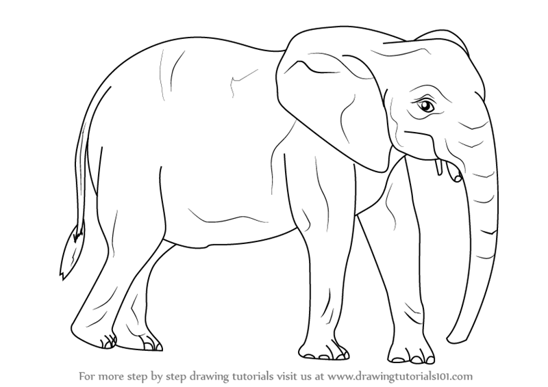 Step By Step How To Draw An African Elephant