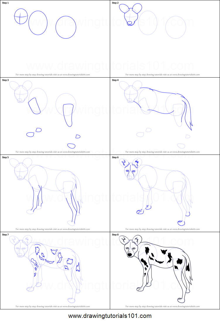 Step by step drawing tutorial on how to draw a african wild dog