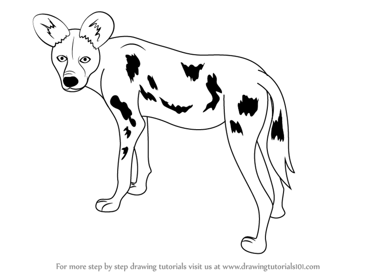 Dalmatian Ears Learn How to Draw a Af...