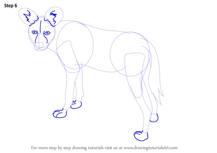 Learn How To Draw A African Wild Dog Wild Animals Step