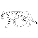 How to Draw an African Wildcat