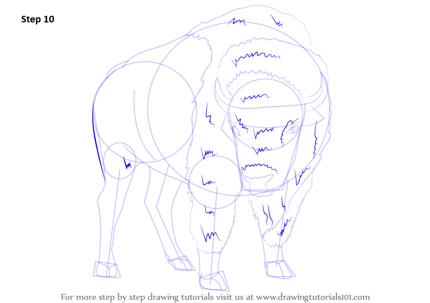 Step By Step How To Draw An American Bison