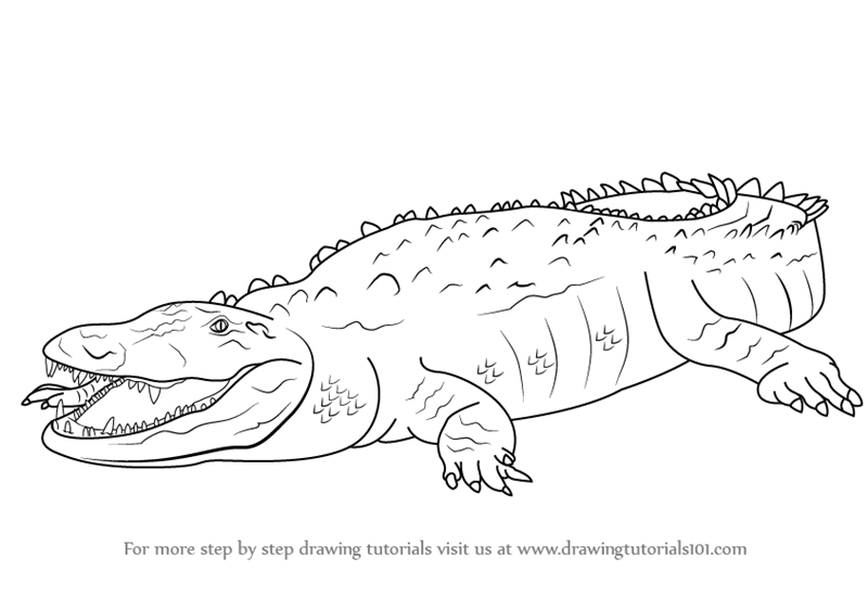 how to draw a alligator head
