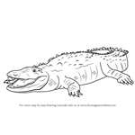 How to Draw an American Crocodile
