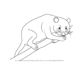 How to Draw a American Marsupial