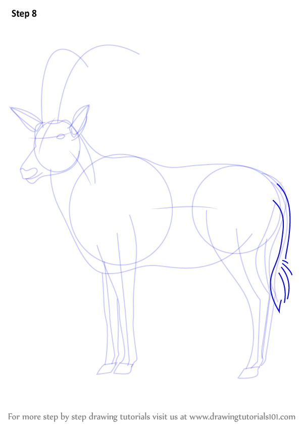 Learn How To Draw An Antelope (Wild Animals) Step By Step