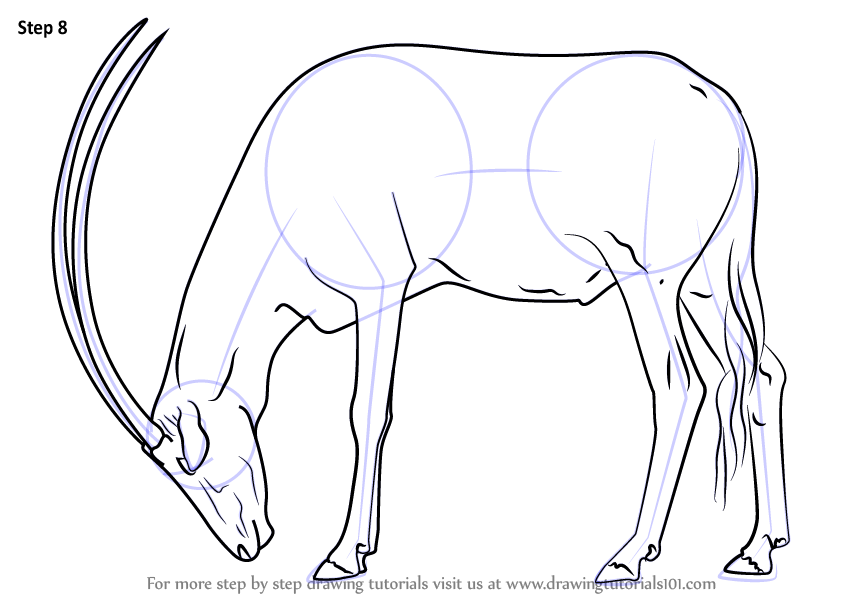 Learn How To Draw A Arabian Oryx Wild Animals Step By