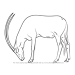 How to Draw a Arabian Oryx