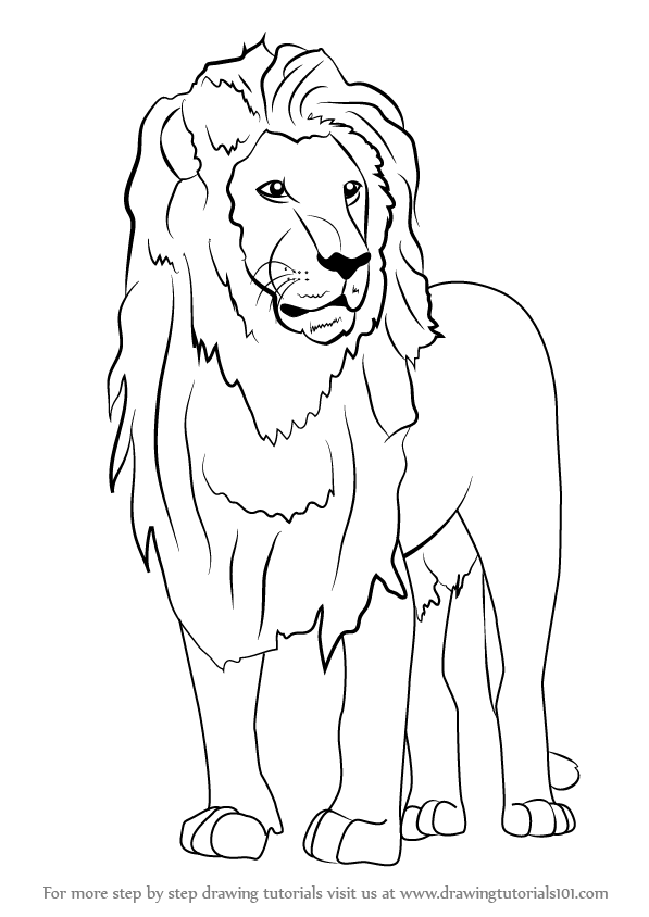 Wild Animals Outline Drawing