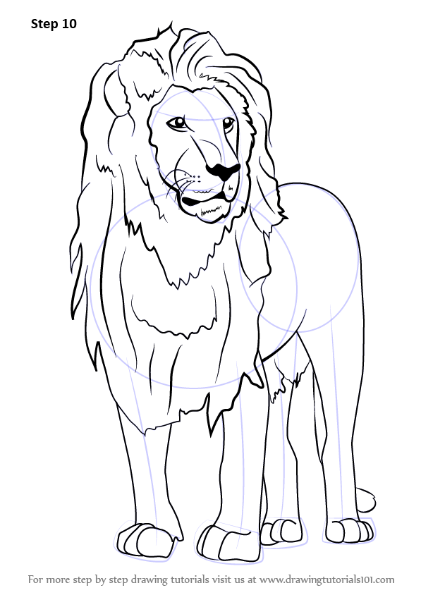 Step by Step How to Draw an Asian Lion