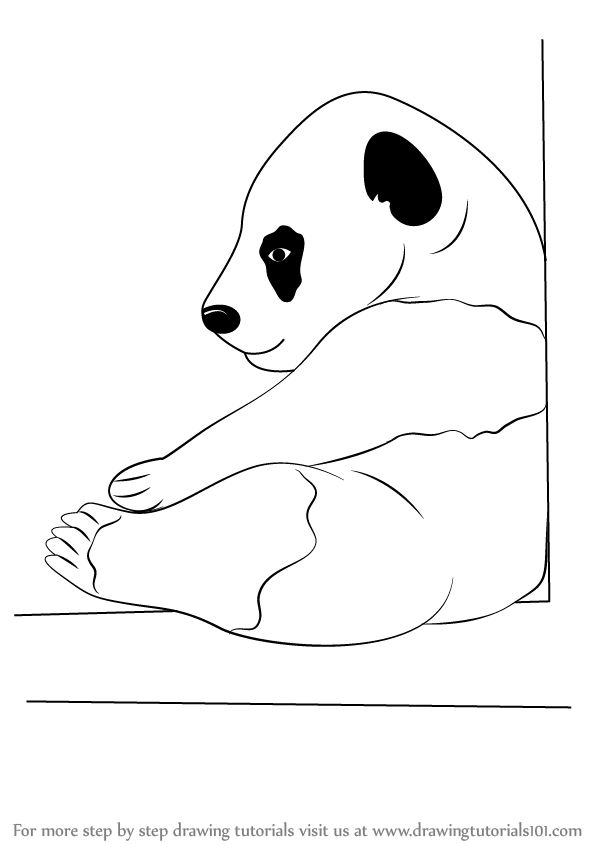 Learn How To Draw A Baby Panda Wild Animals Step By Step Drawing
