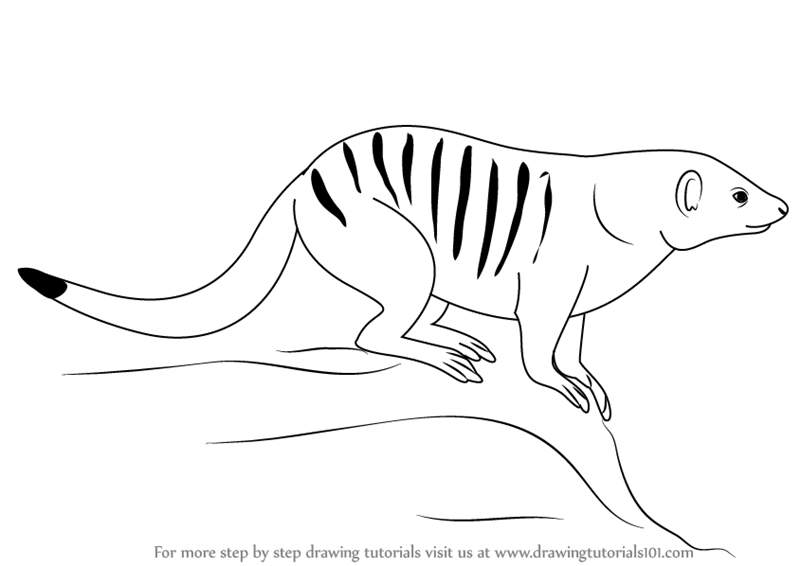 Learn how to draw a banded mongoose wild animals step by for Mongoose coloring page