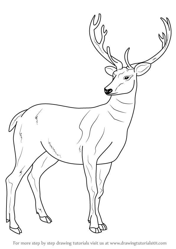 Pictures Of Animals To Draw Step By Step