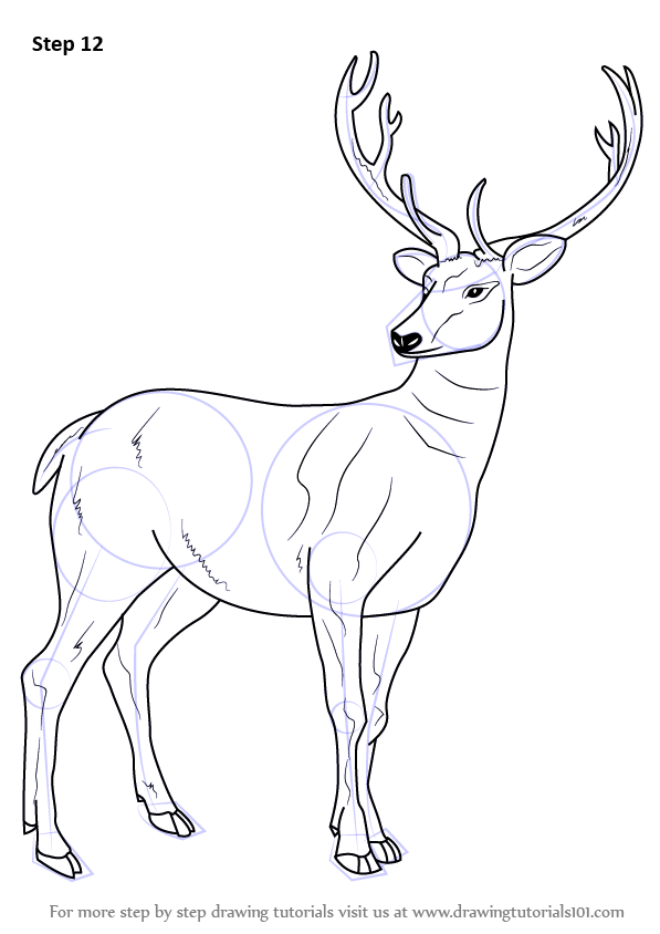 Learn How To Draw A Barasingha Wild Animals Step By Step